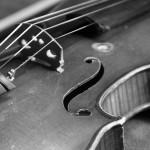violin Sebastien